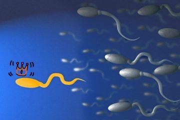 Banca de spermatozoizi in Romania